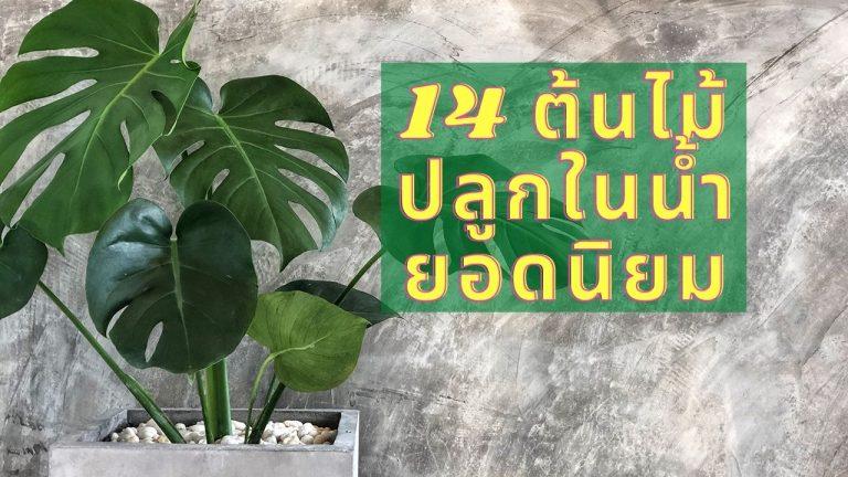 14 ต้นไม้ปลูกในน้ำ ยอดนิยม