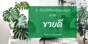 5 ต้นไม้ที่คนนิยมปลูกขาย