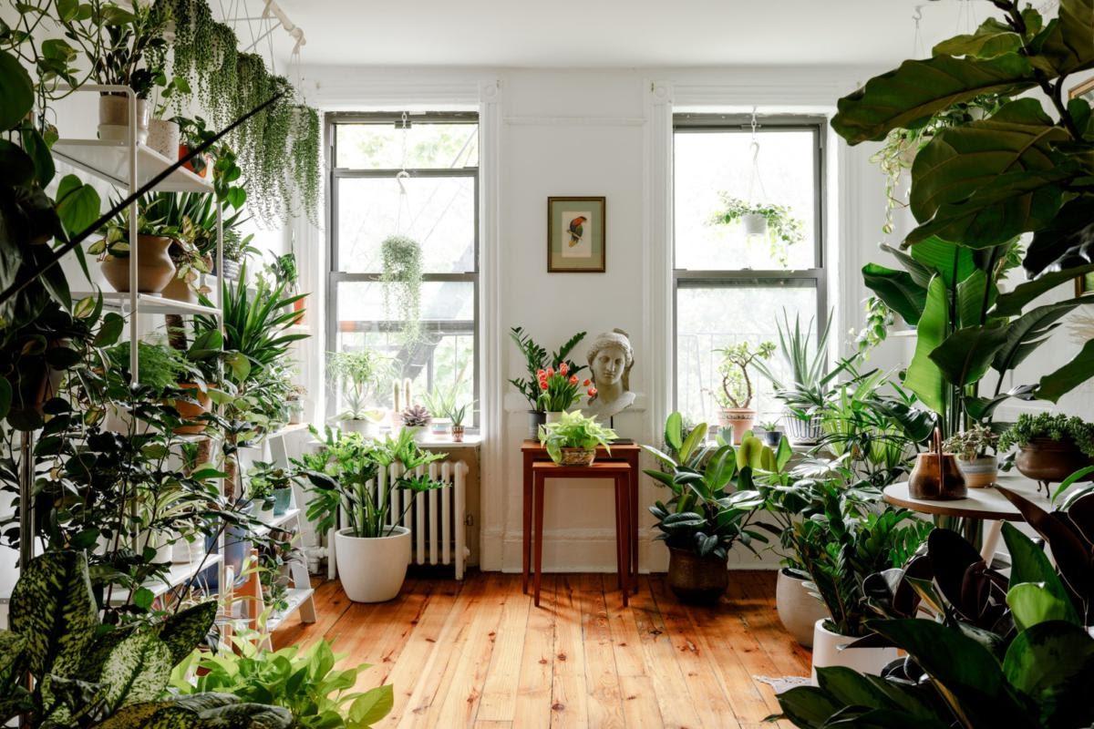 ต้นไม้ประดับ ต้นไม้ปลูกในบ้าน